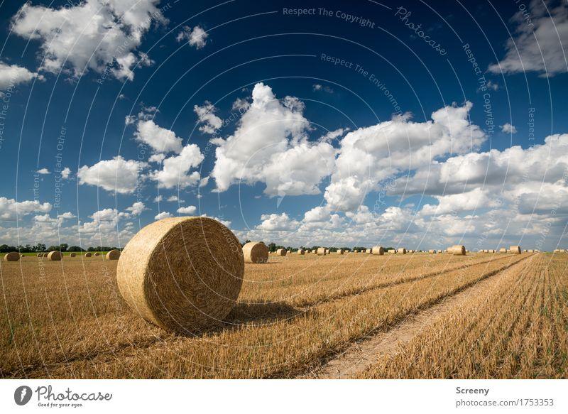 Röllchen und Wölkchen Natur Landschaft Pflanze Erde Himmel Wolken Sommer Herbst Schönes Wetter Feld Dorf rund blau braun gelb weiß Landwirtschaft Spuren