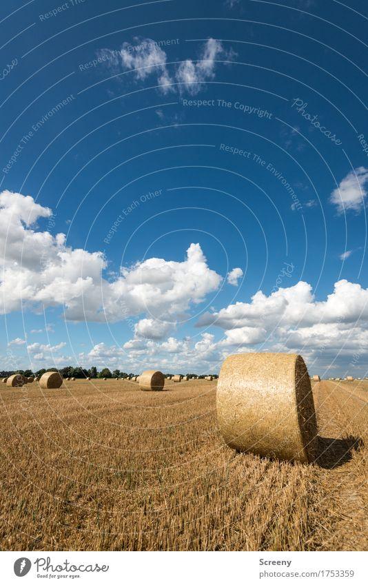 Röllchen und Wölkchen #3 Natur Landschaft Pflanze Urelemente Erde Himmel Wolken Sommer Schönes Wetter Feld rund blau braun gelb weiß Umwelt Landwirtschaft