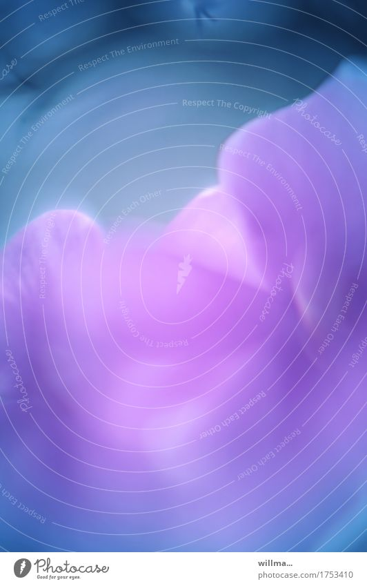 harmonische auslese | klangfarbe Blüte Blume Blütenblatt Duft blau violett ästhetisch einzigartig Kunst Leichtigkeit Surrealismus weich Aquarell Pastellton
