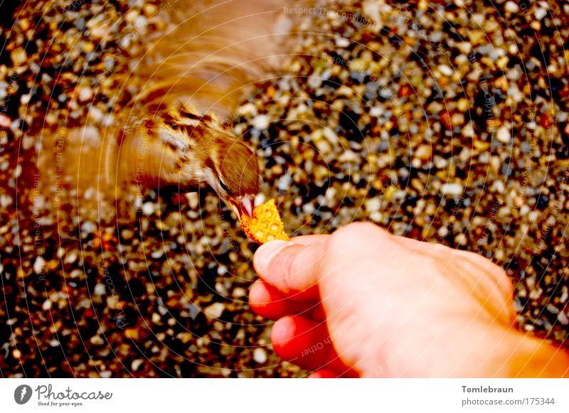 Vogel Natur verrückt nah Flügel Wildtier klug Begeisterung füttern Ganzkörperaufnahme