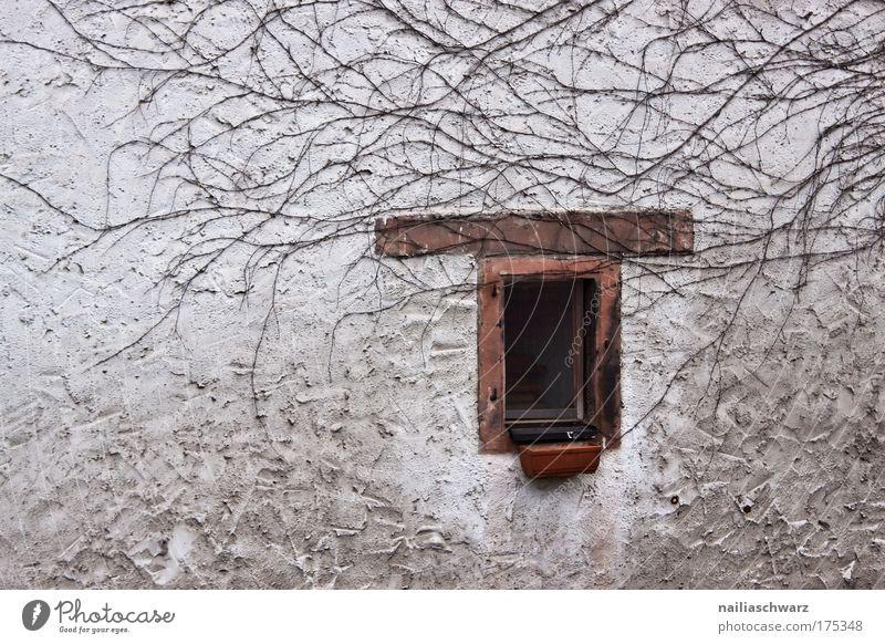 An der Wand (2) ... alt Pflanze Haus Einsamkeit dunkel Fenster grau Traurigkeit Mauer braun Fassade Vergänglichkeit Dorf stagnierend eckig