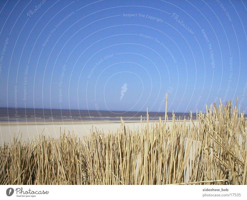 texel_01 Strand Schilfrohr Meer Niederlande Schönes Wetter Stranddüne Texel Horizont Menschenleer Textfreiraum oben Außenaufnahme Farbfoto