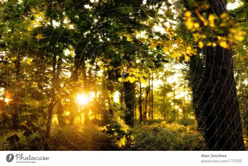 letzten herbst Natur schön Baum grün Pflanze gelb Wald Herbst Landschaft Stimmung Deutschland gold Warmherzigkeit Idylle Gegenlicht Sonnenaufgang