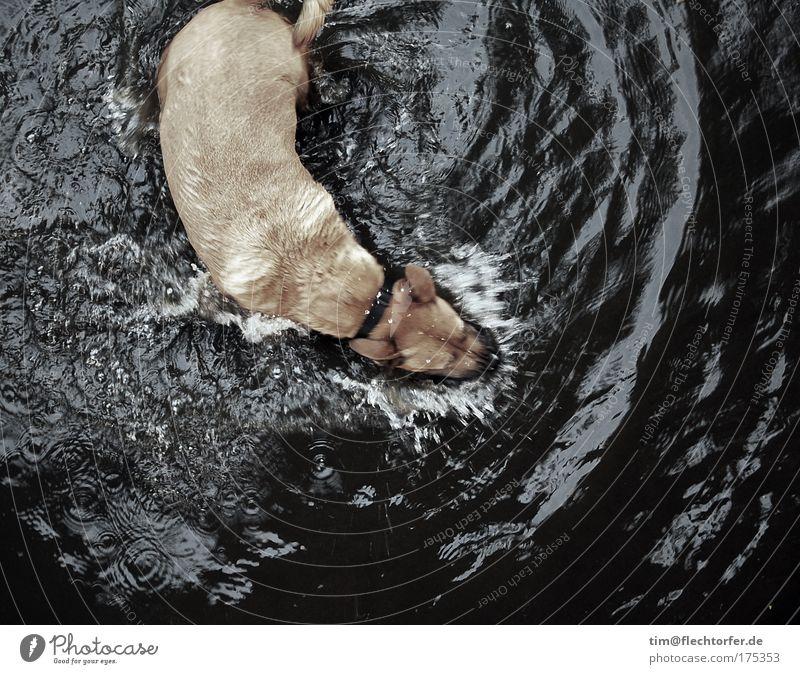 Nasser Hundefang Gedeckte Farben Außenaufnahme Menschenleer Textfreiraum unten Tag Reflexion & Spiegelung Bewegungsunschärfe Vogelperspektive Tierporträt