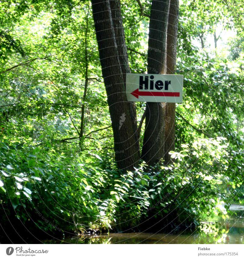 ... geht's lang! Farbfoto Außenaufnahme Detailaufnahme Textfreiraum unten Tag Schatten Umwelt Natur Landschaft Baum Park Wald Seeufer Flussufer Bach Zeichen