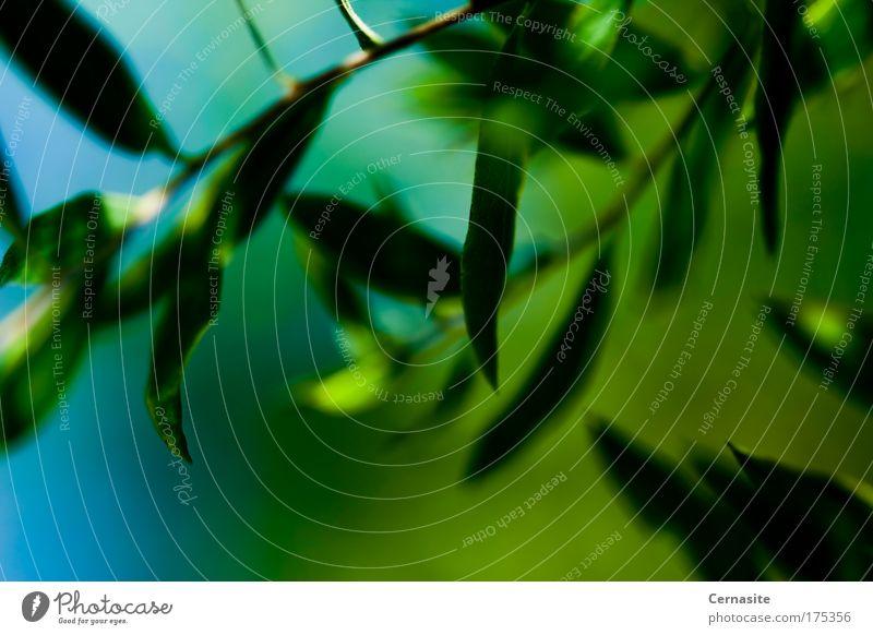 Natur blau Pflanze grün Sommer Blatt Wärme Wiese natürlich wild Wetter Feld frisch elegant Sträucher ästhetisch