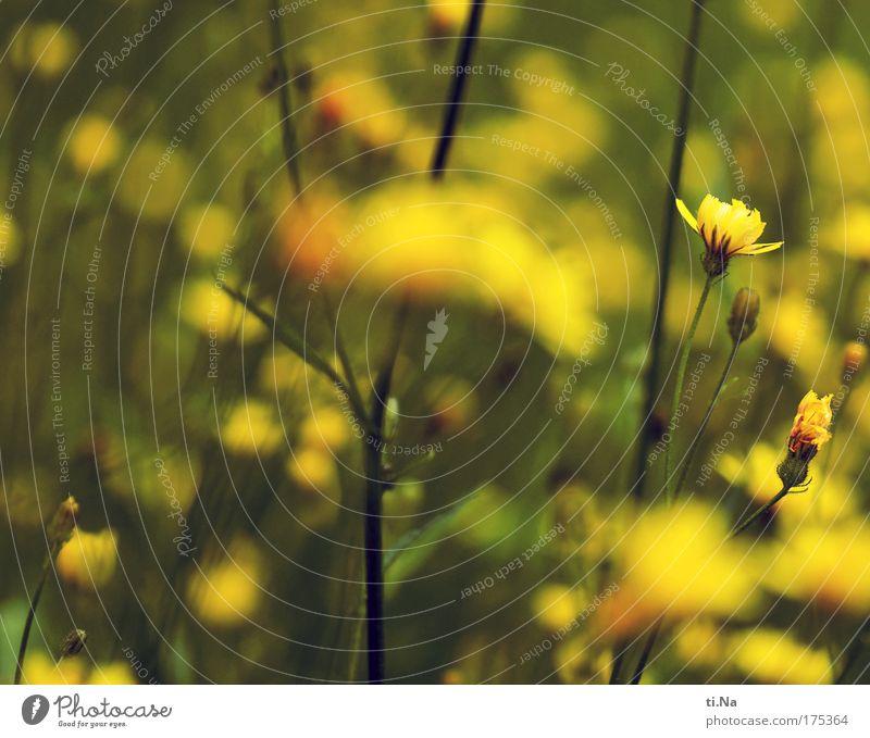 ein paar Blümsche Farbfoto Außenaufnahme Nahaufnahme Menschenleer Tag Umwelt Natur Landschaft Tier Sommer Schönes Wetter Pflanze Blume Gras Sträucher Blüte Park