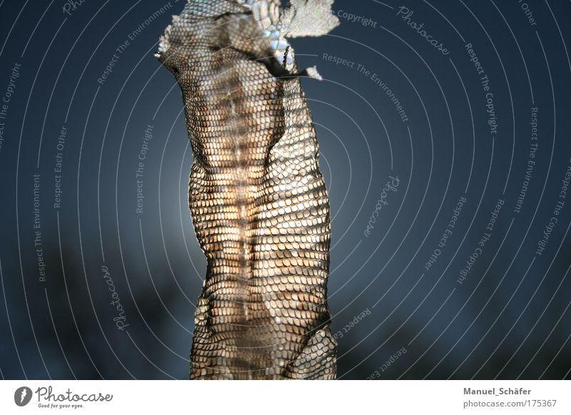 Schlangenhaut Natur Sonne Sommer Tier bizarr exotisch Ekel Reptil Schlange Schuppen häuten Schlangenhaut Totes Tier