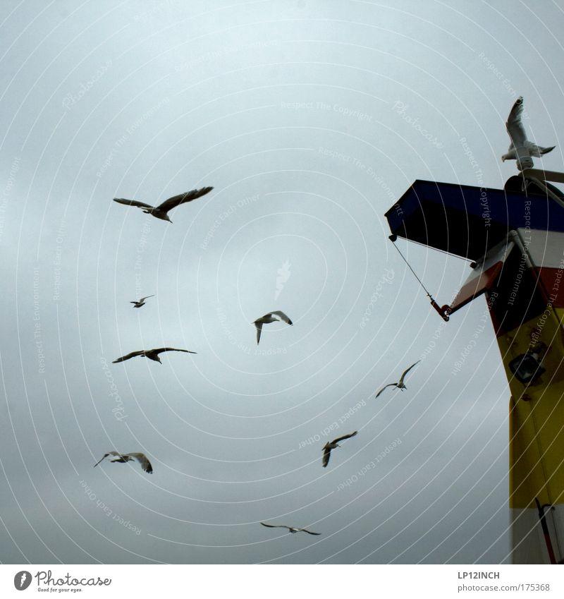 [KI09.1] neUN Natur Meer Sommer grau Zusammensein Vogel Umwelt fliegen Tourismus Tiergruppe beobachten Unwetter Schifffahrt Ostsee Möwe Möwenvögel