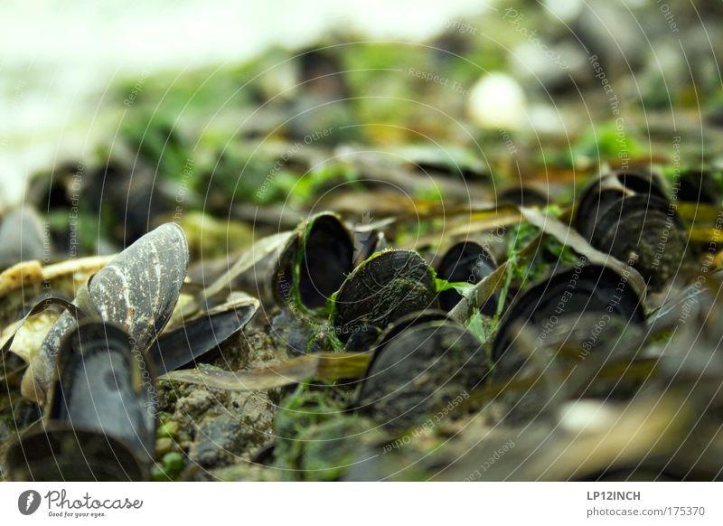[KI09.1] Weichtier_Treffen_Kiel Natur Wasser schön grün Ferien & Urlaub & Reisen ruhig Freiheit Glück Küste Umwelt nass Ausflug offen beobachten Lebensfreude Duft