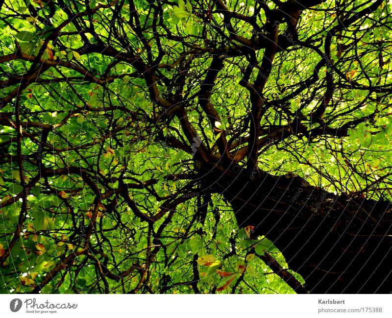 home. in a tree. Design Erholung ruhig Sommer Sommerurlaub Energiewirtschaft Umwelt Natur Sonnenlicht Schönes Wetter Wärme Baum Blatt Ast Blätterdach Zweig