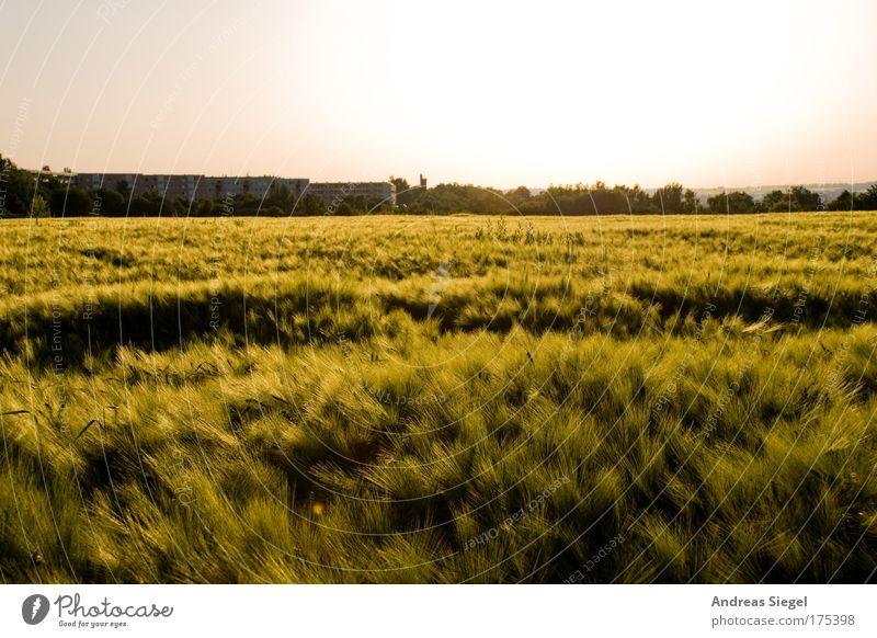 Kleinpestitz Farbfoto Außenaufnahme Menschenleer Tag Abend Dämmerung Sonnenlicht Gegenlicht Ferien & Urlaub & Reisen Ausflug Umwelt Natur Landschaft Himmel