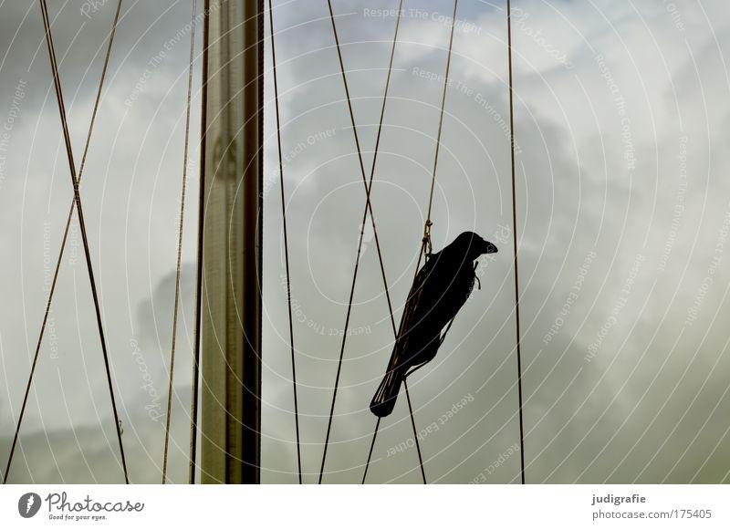 Attrappe Himmel Ferien & Urlaub & Reisen Wolken Einsamkeit Tier dunkel Traurigkeit Stimmung Vogel Wetter Seil bedrohlich Schutz Hafen gruselig
