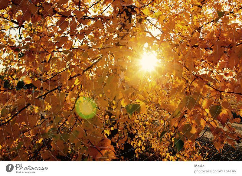 Herbsttraum Natur Ferien & Urlaub & Reisen Sonne Baum Landschaft Erholung Blatt Freude Ferne Wald gelb Denken Freiheit orange Zufriedenheit