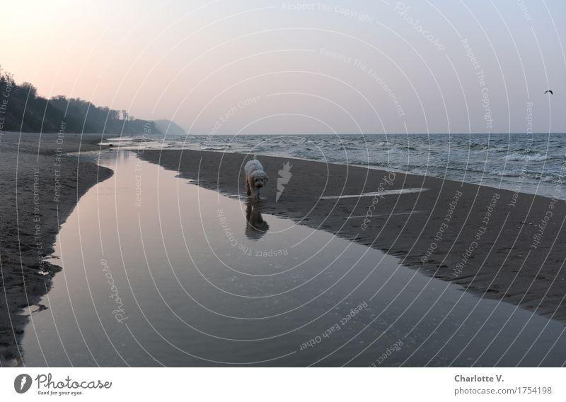 Joggender Seehund Hund Wasser Meer Landschaft Erholung Einsamkeit Tier ruhig Ferne Strand Frühling Küste grau Sand gehen orange