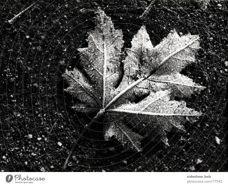 Blatt Baum Blatt Herbst