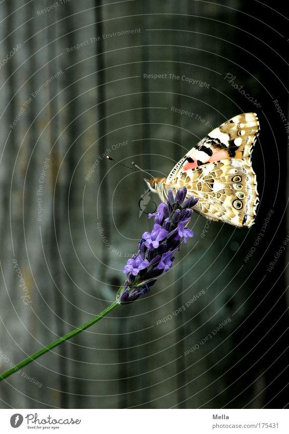 Schmetterlingsfotos sind die neuen Blumenfotos Farbfoto mehrfarbig Außenaufnahme Menschenleer Textfreiraum links Textfreiraum oben Textfreiraum unten Tag