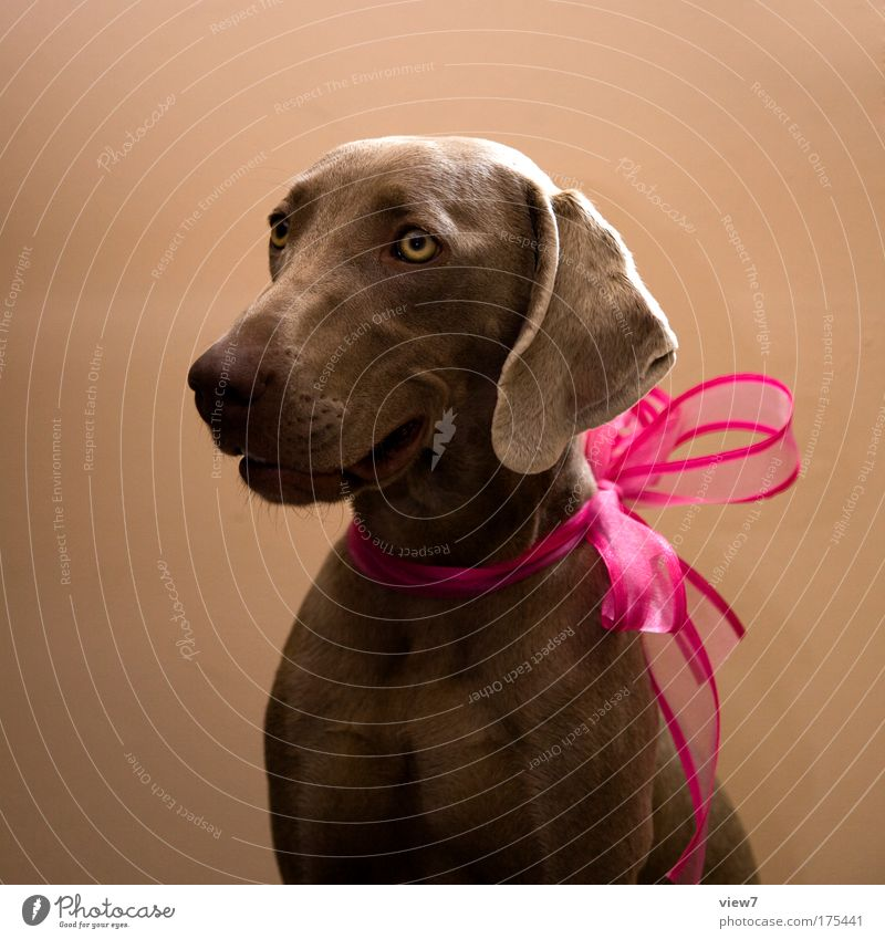 Herzlichen Glückwunsch Freude Tier Glück Hund Stimmung Feste & Feiern rosa elegant Erfolg ästhetisch Fröhlichkeit gut Tiergesicht Kitsch Kunststoff Schnur