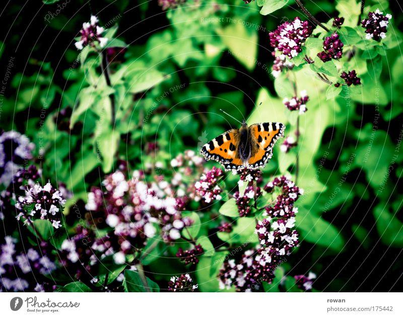 sommergarten Natur schön Blume Pflanze Sommer Freude Wiese Blüte Frühling Garten Glück träumen Park Wärme orange Umwelt