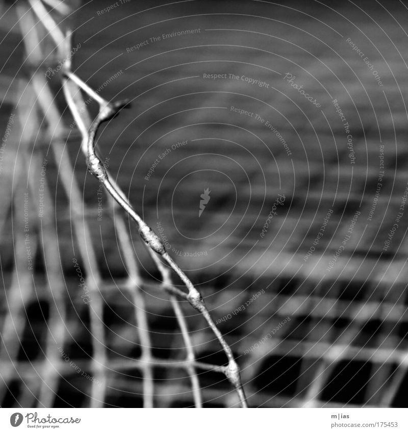 das schweigen des gitters. Ferien & Urlaub & Reisen Freiheit Metall Linie Sicherheit bedrohlich Baustelle Kultur Handwerk Gitter Kontrolle Draht gefangen