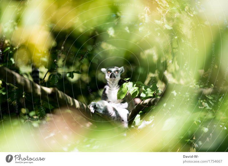 was guckst du Natur Sonne Sommer Schönes Wetter Pflanze Wald Urwald Tier Nutztier Wildtier Tiergesicht Fell Zoo 1 beobachten sitzen Auge groß niedlich verrückt