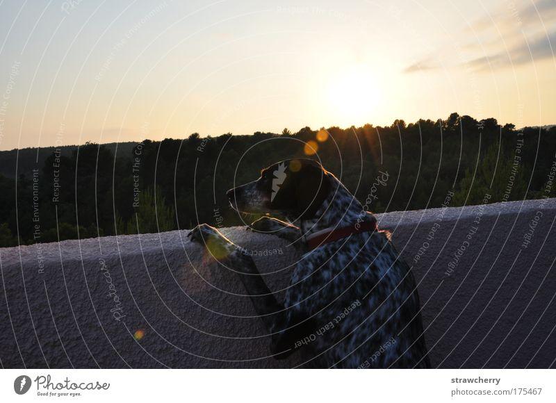Nostalgia schön Sommer Einsamkeit Tier Ferne Wald Erholung Wand Gefühle Freiheit Glück träumen Hund Mauer Zufriedenheit Stimmung