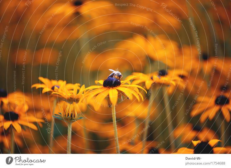 letzten Sommer Natur Pflanze schön Blume Landschaft Tier Umwelt Blüte Frühling Wiese Kunst Garten orange Park Flügel