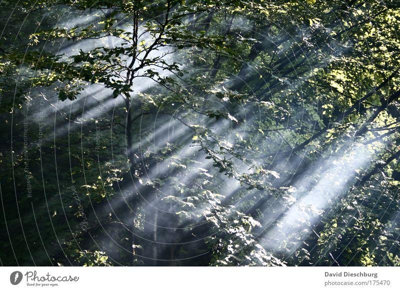 Kraft des Lichtes Natur grün schön Baum Sommer Pflanze Blatt ruhig Wald Landschaft Frühling Luft Linie Nebel Ast Sonnenstrahlen