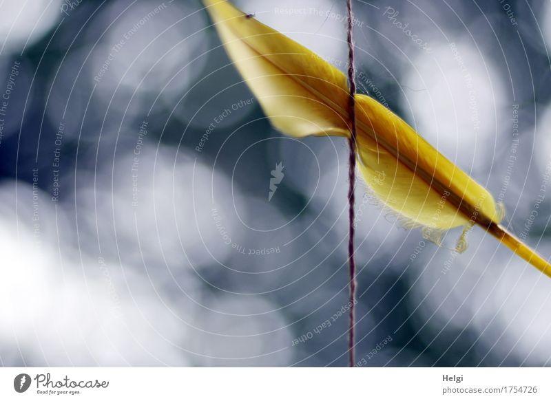 fang den Traum... Schnur Feder hängen außergewöhnlich einfach schön einzigartig blau gelb grau weiß träumen Kreativität Traumfänger Lichtpunkt Farbfoto