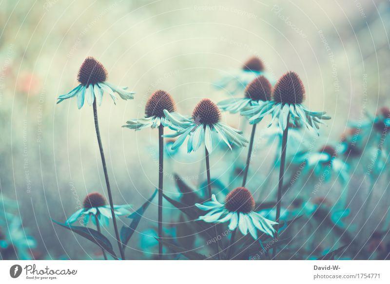 Blumen mystisch Kunst Kunstwerk Gemälde Umwelt Natur Landschaft Pflanze Frühling Sommer Herbst Klimawandel Schönes Wetter schlechtes Wetter Unwetter Blüte