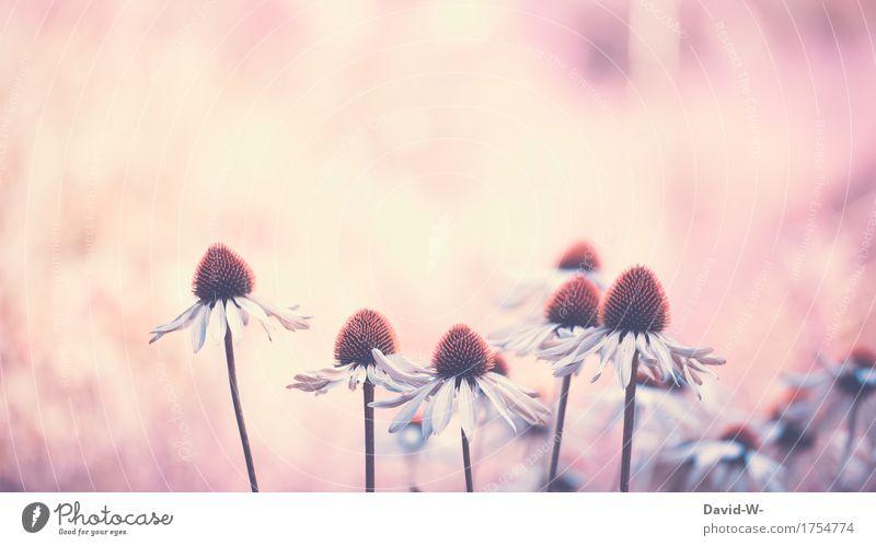 Sonnenanbeter Kunst Kunstwerk Gemälde Umwelt Natur Pflanze Sonnenaufgang Sonnenuntergang Sonnenlicht Frühling Sommer Schönes Wetter Blume Duft schön lieblich