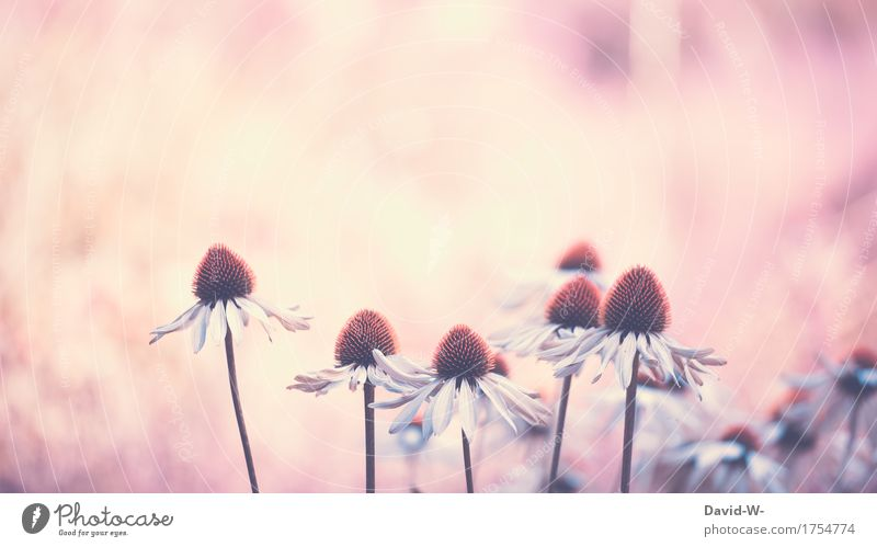 Sonnenanbeter Natur Pflanze Sommer schön Blume Umwelt Frühling Liebe Kunst außergewöhnlich träumen Blühend fantastisch einzigartig Schönes Wetter