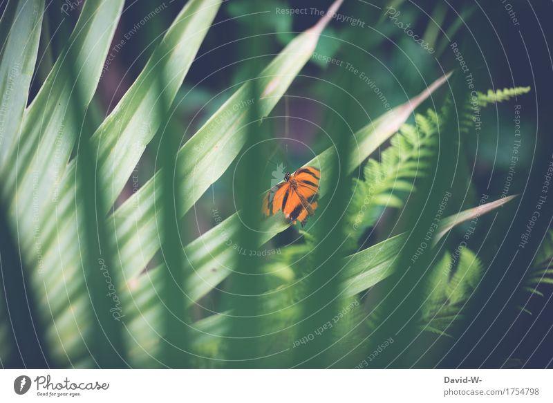 Meine Entdeckung Umwelt Natur Pflanze Tier Luft Sonnenlicht Frühling Sommer Schönes Wetter Sträucher Farn Wald Schmetterling Flügel 1 beobachten grün orange