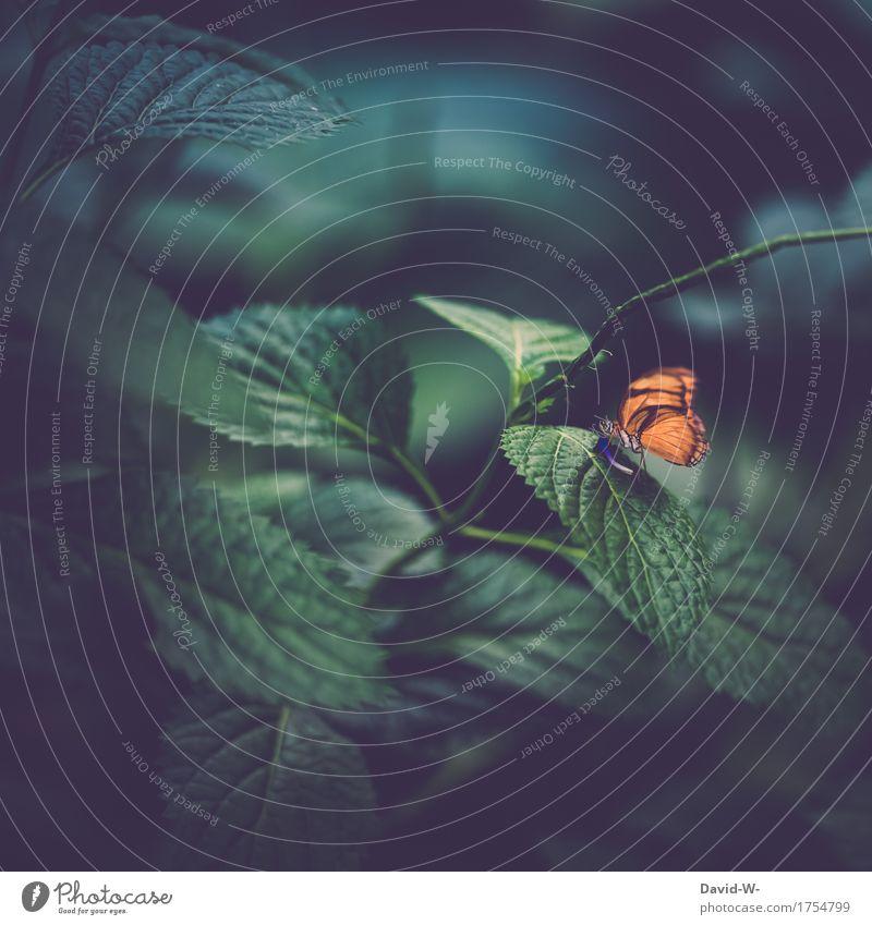 der verwunschene Wald Natur Pflanze Sommer grün schön Blatt Umwelt Blüte Herbst Kunst außergewöhnlich orange Flügel fantastisch einzigartig