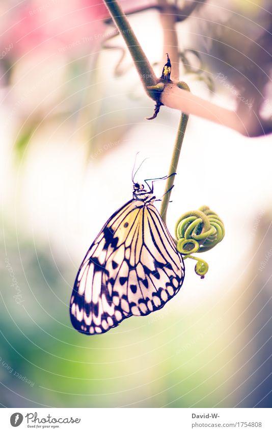 exotisch Kunst Umwelt Natur Landschaft Pflanze Tier Frühling Sommer Schönes Wetter Blume Sträucher Blatt Blüte Grünpflanze Nutztier Schmetterling Flügel 1