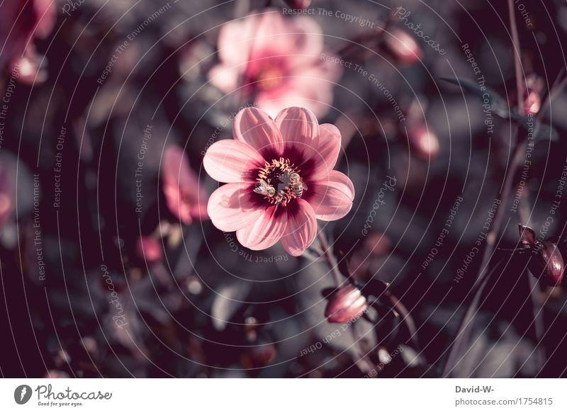 gedeckte Farben Natur Pflanze Sommer schön Blume Landschaft Blatt dunkel schwarz Umwelt Blüte Frühling Herbst Garten Kunst grau