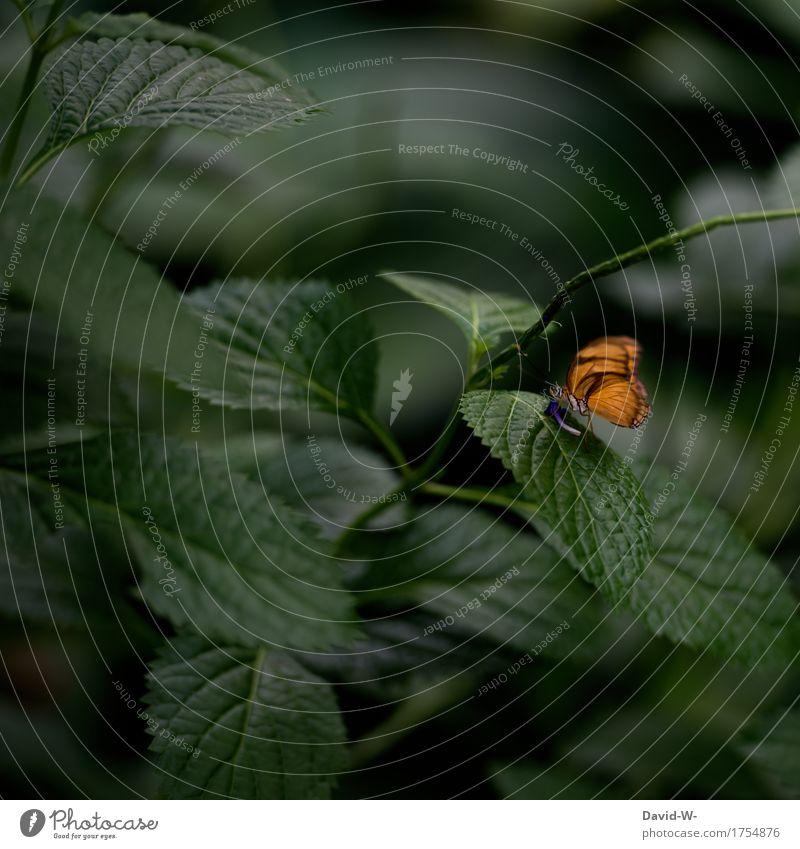Ein Hauch orange Natur Pflanze Sommer Landschaft Blatt Tier ruhig Umwelt Leben Blüte Frühling klein Zufriedenheit elegant Flügel