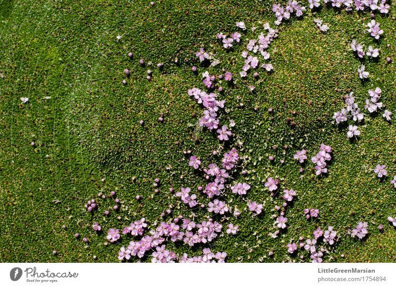 Blumenbeet Natur Pflanze Sommer schön Wald Blüte Garten Park Erde ästhetisch nass weich Boden fest Moos Wildpflanze