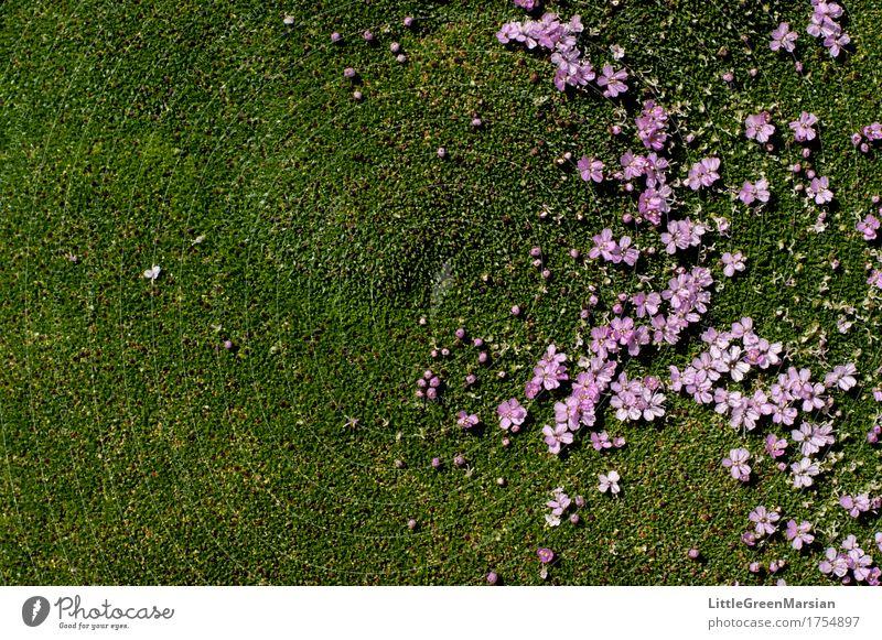 Blumenbeet [3] Natur Pflanze schön Blüte Garten Park Erde ästhetisch nass weich Boden fest Moos Wildpflanze Feuchtgebiete Bodendecker