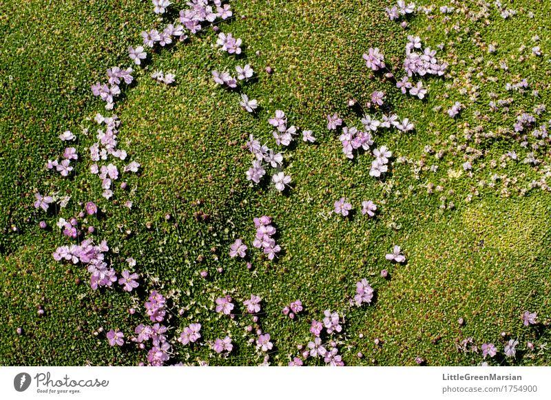 Blumenbeet [4] Natur Pflanze Sommer schön Wald Blüte Garten wild Park ästhetisch nass weich Boden fest Moos