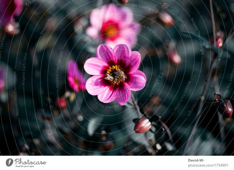 teilen Natur Pflanze Sommer Blume Landschaft Blatt Tier dunkel Umwelt Blüte Frühling Wiese Herbst klein Garten Zusammensein