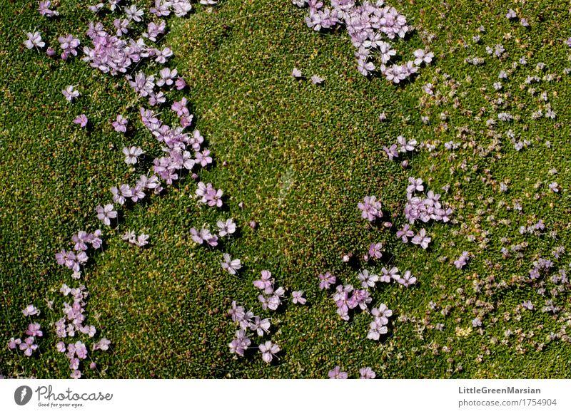 Blumenbeet [2] Natur Pflanze Sommer schön Wald Blüte Garten Park Erde ästhetisch nass weich Boden fest Moos Wildpflanze