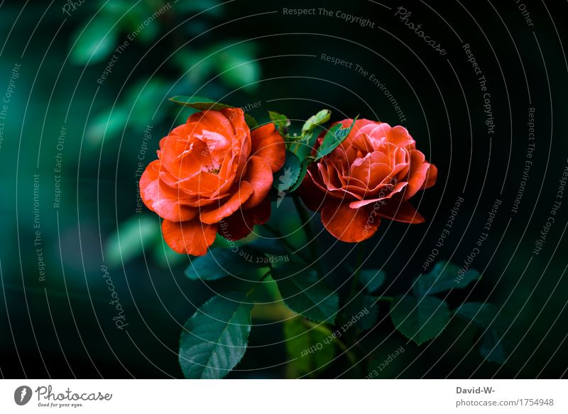 Farbe im dunklen Natur Pflanze Sommer grün schön Blume Landschaft rot Blatt Umwelt kalt Blüte Frühling Wiese Garten Zusammensein