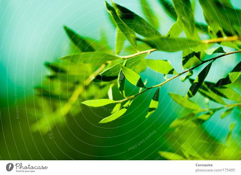 Natur blau grün schön Pflanze Sommer Blatt gelb dunkel Wiese Park Feld außergewöhnlich wild frisch ästhetisch
