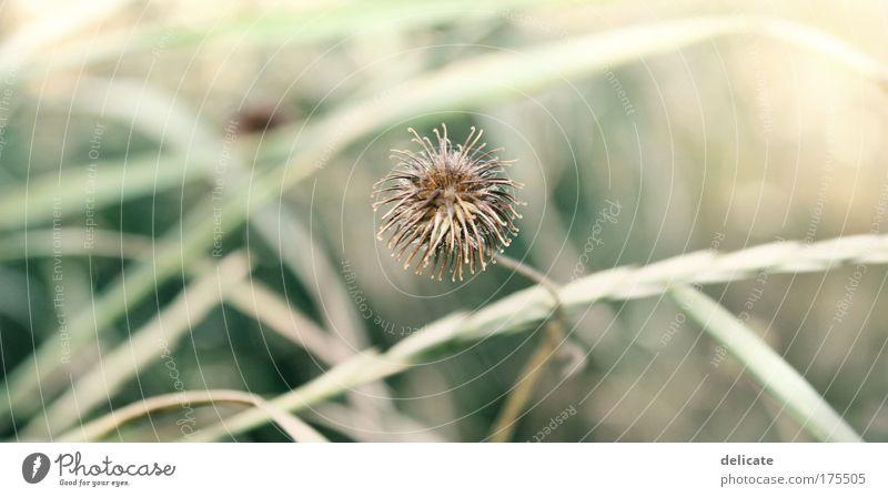 Feels like sunshine, feels like rain Natur grün Pflanze Gefühle Einsamkeit Gras Garten träumen Traurigkeit braun warten glänzend rund Sträucher fallen Unendlichkeit