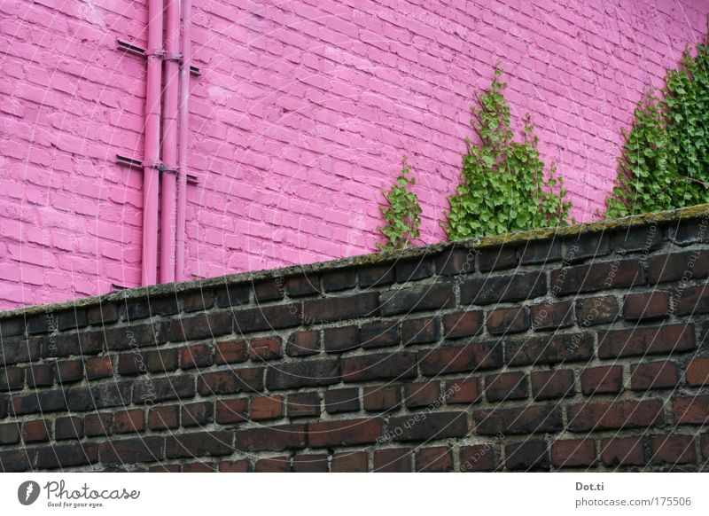 fun house grün Farbe Wand Mauer Gebäude rosa Fassade Fröhlichkeit Fabrik Kitsch einzigartig Mut Backstein Röhren Bauwerk