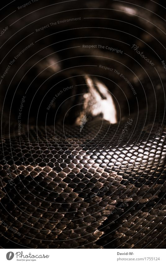 Ratespiel Kunst Umwelt Natur Tier Wildtier Schuppen Zoo 1 schlafen außergewöhnlich bedrohlich braun achtsam Wachsamkeit gefährlich Respekt Risiko ruhig Schlange