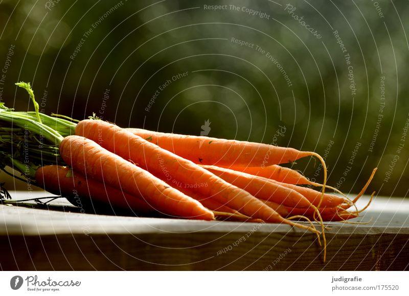Möhren Farbfoto Außenaufnahme Tag Lebensmittel Gemüse Ernährung Garten liegen Gesundheit lecker frisch Ernte Rohkost knackig
