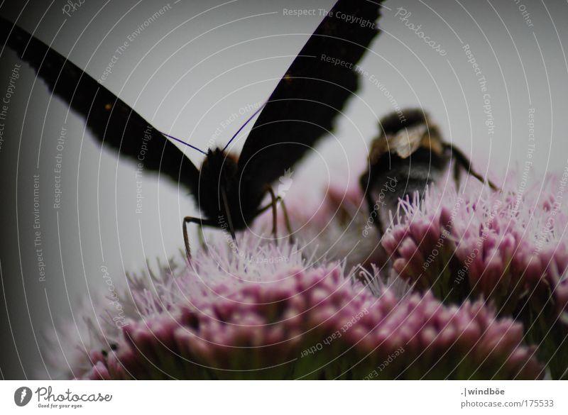Blüten tanken Farbfoto Außenaufnahme Nahaufnahme Detailaufnahme Menschenleer Tag Schatten Kontrast Zentralperspektive Totale Tierporträt Vorderansicht