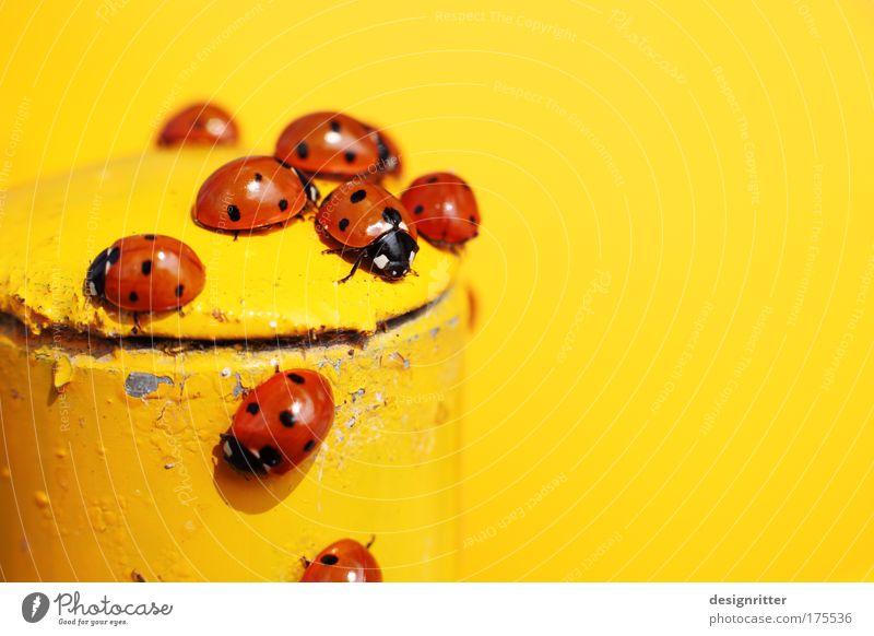 rote Punkte mit schwarzen Punkten schön Tier gelb Wärme lustig Feste & Feiern Bar Tanzen elegant laufen fliegen süß bedrohlich Tiergruppe niedlich